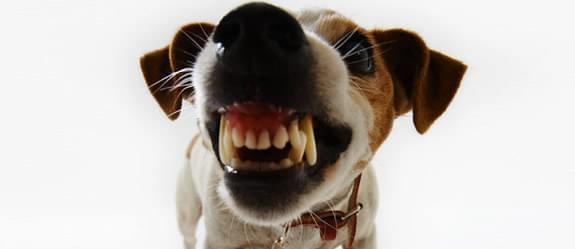cachorro acupuntura estresse