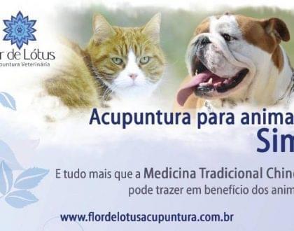 acupuntura veterinária animais animal cachorro cachorros gato gatos