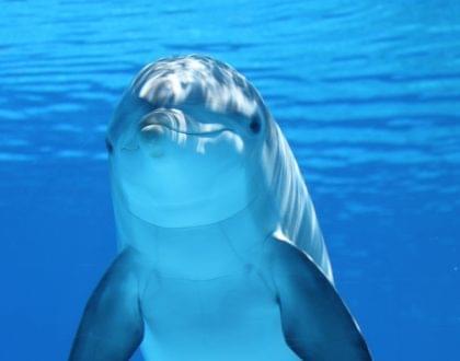 golfinho inteligente natureza