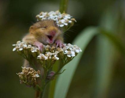 hamster animal bem estar