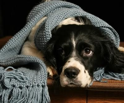 cachorro roupa frio agasalho