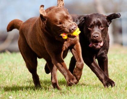 vida mais natural cachoror saude saudavel cuidados