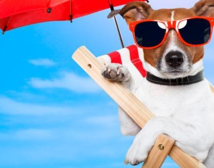 documentação necessária para viajar com seu animal