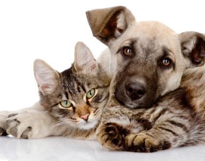 benefícios da castração de cães e gatos