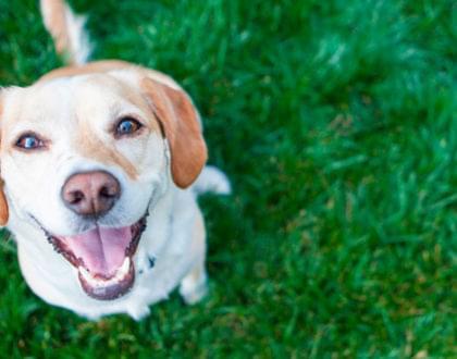 parques paulistanos para se passear com seu cão