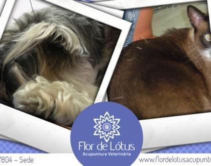 tratamentos alternativos para animais