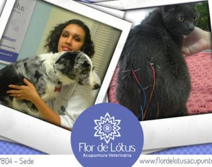 acupuntura para animais como funciona