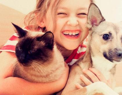 alergias aos pelos dos felinos