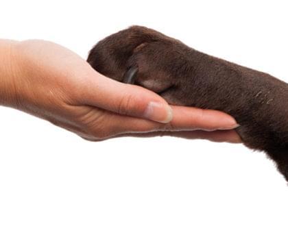 abeac adote adocao animais posse responsável cachorro tutor dono carinho cuidado abandono