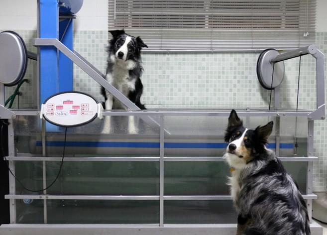 Hidroterapia cachorro fisioterapia água